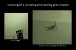 tracking of a jumping and landing grasshopper